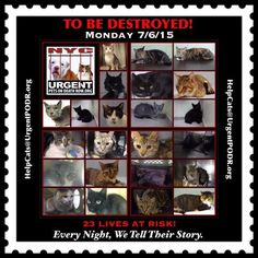 TWENTY THREE CATS NYC!!! TBD 07/06/15 - - Info  TO BE DESTROYED -  Click for info & Current Status: http://nyccats.urgentpodr.org/tbd-070115/