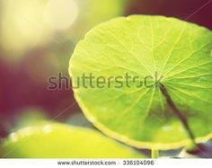 Vintage style photo of fresh and green leaves with abstract bokeh and sunlight backgrounds. Extremely shallow dof.   Image with copy space for adding text or quote. - stock photo