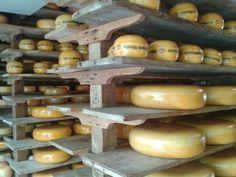 Zuiderzeemuseum, Enkhuizen (Netherlands). Dutch cheese