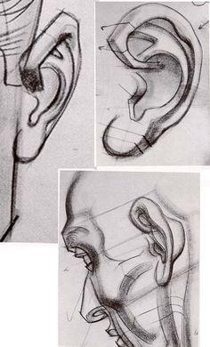 ears Art by Burne Hogarth Anatomy Sketches, Anatomy Drawing, Anatomy Art, Human Anatomy, Drawing Techniques, Drawing Tips, Drawing Sketches, Art Drawings, Drawing Heads