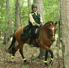 Recusa Interagro, owned by Sarah Vogeley of New Forest Farm, is an integral part of TrotSAR, an equine search and rescue that serves government public safety organizations in rescuing victims in wilderness, rural or urban/suburban settings. (Photo: Sarah Vogeley)