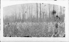 View of a black man picking cotton. Loyola University New Orleans, Louisiana State University, Louisiana History, Louisiana Tech, Oral History, Teaching History, Picking Cotton, Cotton Fields, Types Of Resources