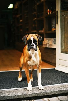 Imogen want this dog and this store