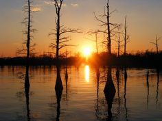 Black Bayou, Monroe, Louisiana ---almost right out my back door.
