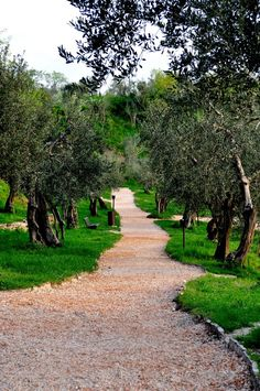 Olive Garden, Sirmione
