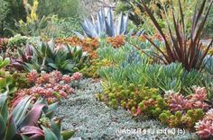Succulent Garden Design (1024×680)