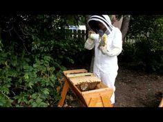 sugar shake varroa mite treatment for the bees.  Gotta do this asap.