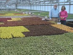 Grow with KARE: Behind the scenes at Wagner's