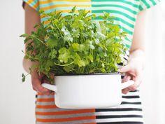 We grow herbs in a pot! Check out my post: http://divaaniblogit.fi/kotilo/2014/06/09/parvekeyrtit-kattilassa/