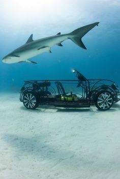 The Volkswagen Beetle Convertible shark cage
