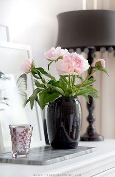 Rosa Pfingstrose in schwarzer Vase. Schöne Farbkombination.