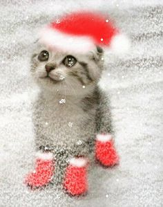 cute ....cat xmas time gif motion click