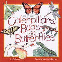 Eight caterpillars, twelve bugs, and ten moths and butterflies are included in this succinct, introductory identification guide. With one page per insect, the reader will learn what it looks like, what it eats and where to find it. Among the insects are the monarch caterpillar and butterfly, the ladybug, firefly and the field cricket. Softcover, 48 pp, ages 9-12.