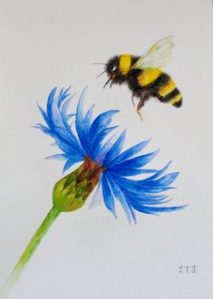 Buy Bumblebee and Cornflower, Watercolour by Jean Tatton Jones on Artfinder. Discover thousands of other original paintings, prints, sculptures and photography from independent artists. Bee Painting, Painting & Drawing, Garden Painting, Painting Prints, Watercolor Flowers, Watercolor Art, Watercolour Paintings, Bee Drawing, Bee Tattoo