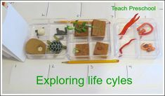 Exploring life cycles by Teach Preschool