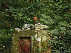 Some birds enjoy being taken photos of :)