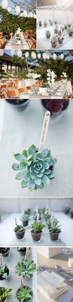 Table numbers and escort cards using different little plants.