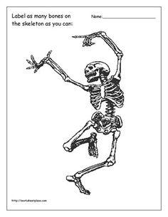 free bones skeletal system puzzle worksheet - ourtimetolearn, Skeleton