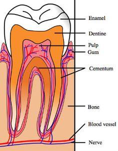 how to heal teeth naturally