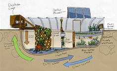 Dark Rye's Garden Pool. Sustainable farming, in a pool, in the middle of the desert! Amazing!