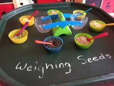 Spring Week 1 – seeds and tadpoles – allbirdsareowls Maths Eyfs, Eyfs Classroom, Numeracy, Year 1 Classroom, Classroom Ideas, Nursery Activities, Preschool Activities, Kindergarten Inquiry, Continuous Provision Year 1
