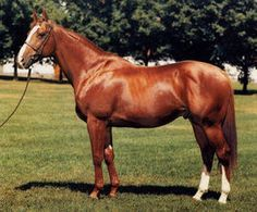 Czaravich(1976)Nijinsky II- Black Satin II By Linacre. 4x5 To Hyperion, 4x5x5 To Panorama. 13 Starts 8 Wins 5 Thirds. Won Jerome S(G2), Withers S(G2), Metropolitan H(G1), Carter H(G2), 3rd Woodward S(G1), Wood Memorial S(G1)., Man O' War S(G1T)Suburban S(G1), Whitney S(G2).
