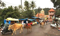 Goa – das andere Indien Air India, Goa, Camel, Night, Animals, Indian, Viajes, Animales, Animaux