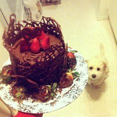 Chocolate cake Chocolate Cake, Cakes, Ethnic Recipes, Food, Cake Chocolate, Chocolate Cobbler, Meal, Chocolate Stout Cake, Cake