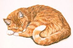 Linda Picken Art Studio / Orange Tabby Lying Down.jpg