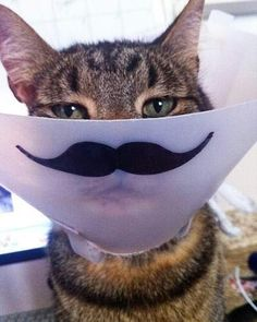 The cone of shame just got hilarious.