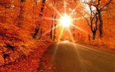 This is so gorgeous! Any place that has these beautiful fall colors! Beautiful World, Beautiful Places, Beautiful Pictures, Beautiful Roads, Welcome Fall, All Nature, Autumn Nature, Belle Photo, Autumn Leaves