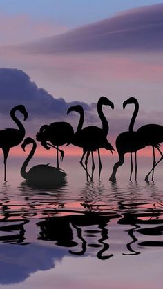 Ideas for wallpaper pink flamingo animals Flamingo Wallpaper, Flamingo Art, Nature Wallpaper, Pink Flamingos, Wallpaper Backgrounds, Flamingo Photo, Iphone Backgrounds, Phone Wallpapers, Flamingo Pictures