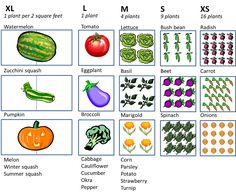 Back to the Basics!: Choosing Plant Varieties for a Raised Bed Garden