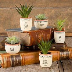 Succulent Keepsakes by Natural Life is part of Succulent garden design - Little succulents bring warmth and life to your space! These Succulent Keepsakes feature heartwarming sentiments and a faux plant so you'll never h Hanging Succulents, Faux Succulents, Faux Plants, Succulent Pots, Succulents Garden, Garden Pots, Painted Plant Pots, Painted Flower Pots, Succulent Landscaping