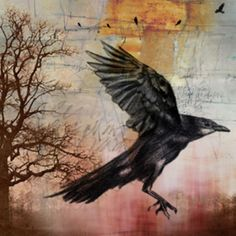 Stephanie Imhoff  'Flying Raven', 2007 Digital Drawing