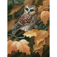 Northern Saw-Whet Owl Beautiful Owl, Animals Beautiful, Cute Animals, Owl Photos, Owl Pictures, Owl Art, Bird Art, Funny Bird, Steampunk Animals
