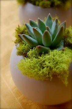 Succulent In Modern Ceramic Container