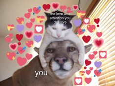 Me wuvs you this much! Memes Amor, Dankest Memes, Funny Memes, Cute Cat Memes, Cute Love Memes, I Love My Friends, My Best Friend, Reaction Pictures, Funny Pictures