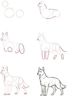 🌸~Credits to the artist, amazing wolf drawing tutorial~🌸 Drawing Skills, Drawing Techniques, Drawing Tips, Painting & Drawing, Drawing Ideas, Drawing Drawing, Wolf Drawing Easy, Learn Drawing, Pencil Painting