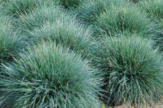 A sziklakert sztárjai: A 7 különleges növény (és elhelyezésük) Yard Landscaping, Herbs, Landscape, Plants, Gardens, Scenery, Outdoor Gardens, Herb, Plant