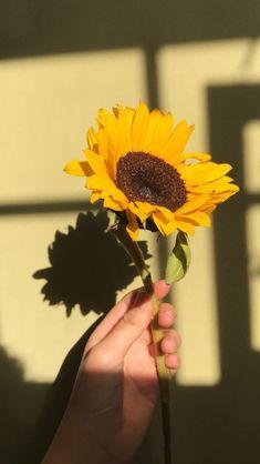 Girasoles Aesthetic Colors, Flower Aesthetic, Aesthetic Photo, Aesthetic Pictures, Aesthetic Yellow, Sun Aesthetic, Vintage Wallpaper, Photographie Portrait Inspiration, Sunflower Wallpaper