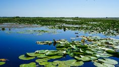 The Danube Delta in Romania is one of Europe's last great wilderness and a perfect place to be discovered with Discover Danube Delta Tours Danube Delta, Romania Travel, Central Europe, Where To Go, Cool Places To Visit, The Good Place, Beautiful Places, Road Trip, The Incredibles