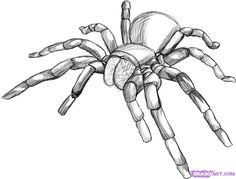 how to draw a tarantula spider step 5