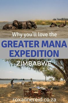 You'll love the Greater Mana Expedition at Sapi and Mana Pools Zimbabwe, from the landscapes to the wildlife, birding, walking safaris, canoeing and game drives, Great Plains Zimbabwe's Sapi camps, remote wilderness, professional guides, sunrises and sunsets, star-gazing and conservation. Explore Mana Pools Zimbabwe, Mana Pools National Park and Sapi Zimbabwe on a Zimbabwe safari. #safari #ManaPoolsZimbabwe #GreaterMana Expedition #wildlife #africa #zimbabwe
