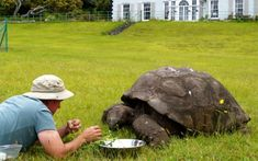 jonathan the 180 year old tortoise Tortoise As Pets, Giant Tortoise, Colorful Parrots, One Hundred Years, Asian Elephant, Tortoises, Year Old, The Incredibles, Animals