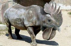Funny hybrid animals..