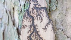 Making Lichtenberg Figures in Wood