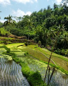 Rice fields of Gunung Kawi, Bali, Indonesia Most Beautiful Beaches, Beautiful Places, Bali Lombok, Farm Stay, Jolie Photo, Kerala, Agriculture, New Art, Places Ive Been