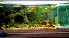 Мой аквариум (Aquarium) 100 литров