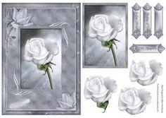 sympathie Rose